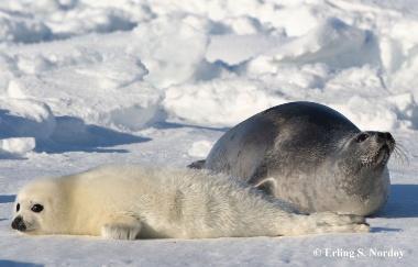 Arctic-Animal-Physiology-Biology-master-Studiekatalog-380px-