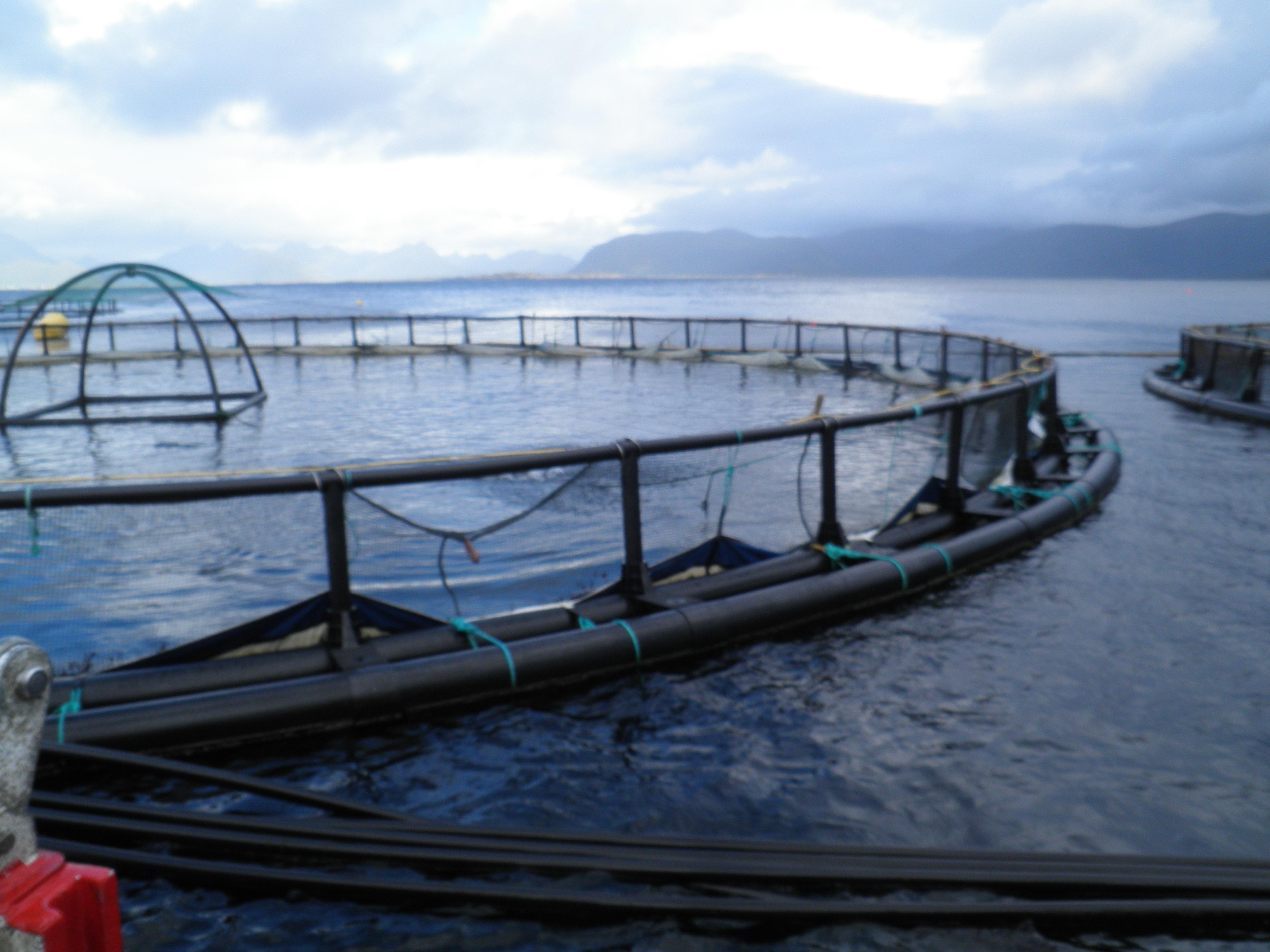 Aquaculture and environment uit for Piscine reovirus