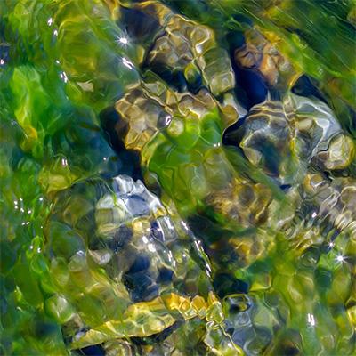 alge400.jpg