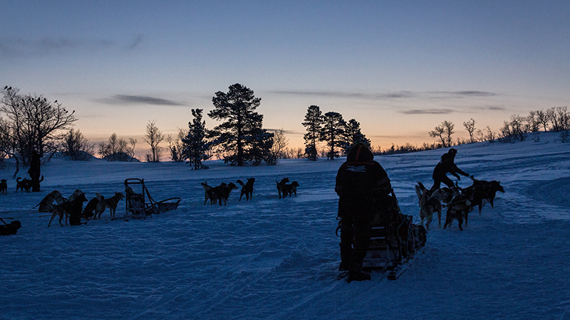 Dog mushing in fading daylight