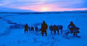 ArcticReviewjubileumillustrasjon.jpg